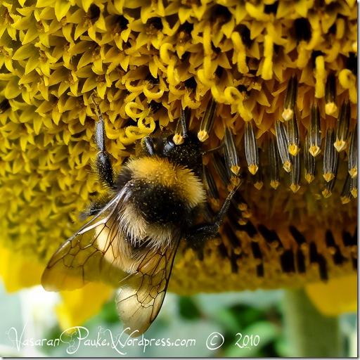Kukkia ja Mehiläisiä (9 of 10)